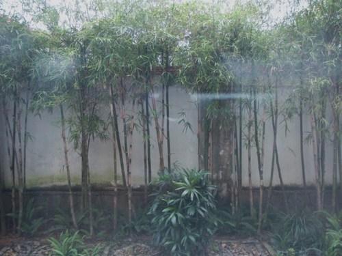 ベトナム 236.JPG