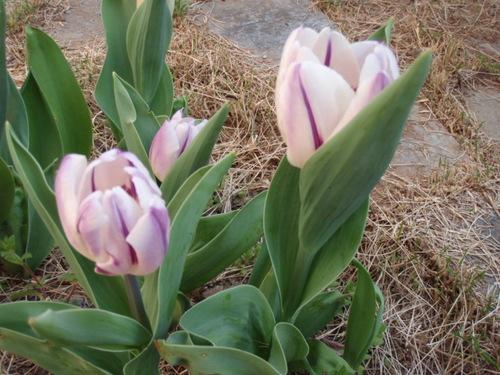 庭の花 005.JPG