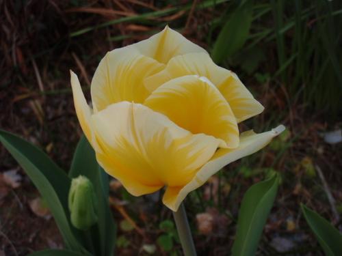 庭の花 006.JPG