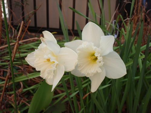 庭の花 007.JPG