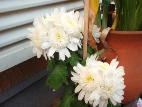 庭の花 052.JPG