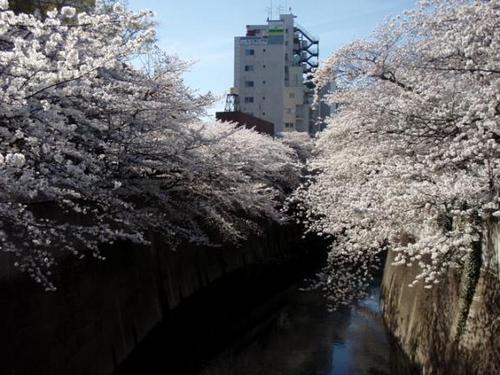 o0576043212893215478神田川.jpg