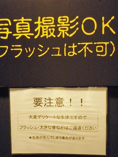 P6210200.JPG