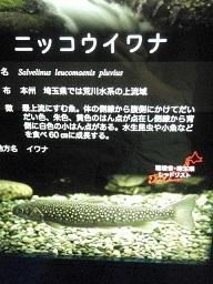 PA293610 - コピー.JPG